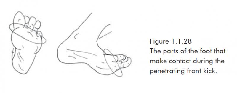 Các bộ phận của bàn chân tiếp xúc trong quá trình Đá tống trước
