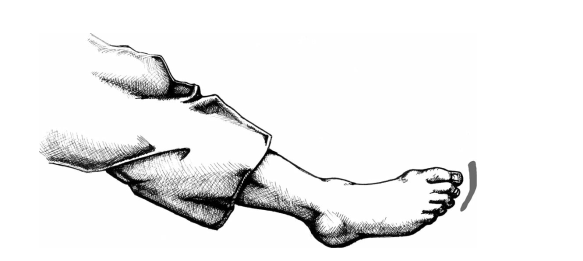 Sokusen hoặc các ngón chân.